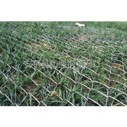 供应广州勾花网 、菱形网、斜方网 、环连网 、环链网、勾网 、锚网 、防护网、养殖围栏用网、活络网