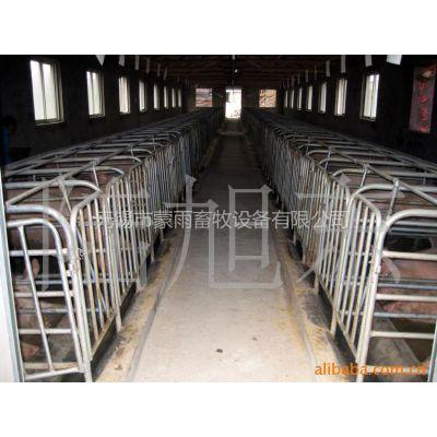 供应养猪设备,江苏养猪设备,畜牧设备怀孕母猪定位栏
