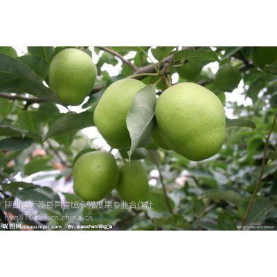 陕西早酥梨产地批发陕西酥梨价格早酥梨产地批发价格