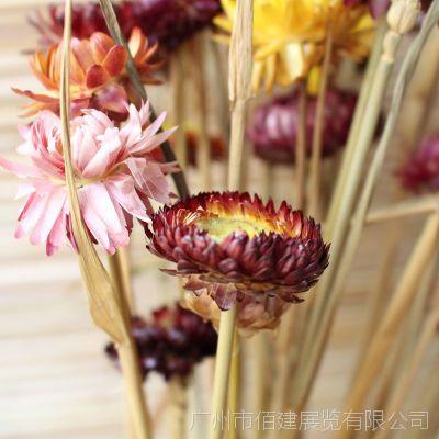 家居饰品植物干花果壳手工 鲜花仿真花 天然非洲菊 新品