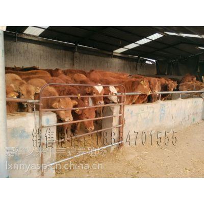 昆明哪里有牛犊买≈小牛价格≈≈≈≈≈≈[地虎与中间型。 鷀