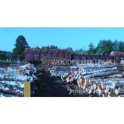供应欧洲白桦原木