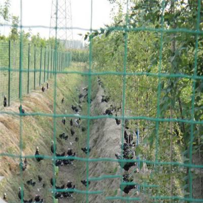 大型散养鸡鸭养殖围栏网 家禽养殖铁丝网 墨绿色铁丝网