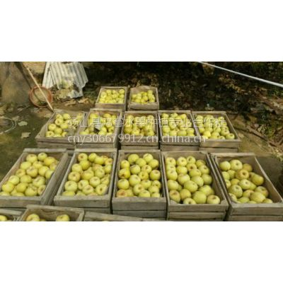 供应砀山酥梨砀山梨/优质砀山梨/砀山梨产地/优质砀山梨