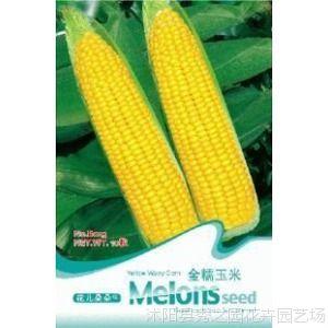 粮食作物种子┊花卉种子┊金糯玉米种子10粒
