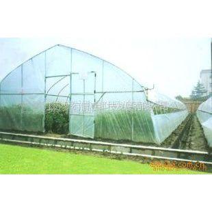 供应花卉类温室一般温室大棚