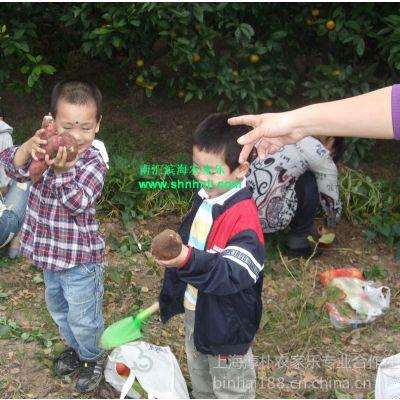 供应上海周边农家乐 郊区旅游 桔子采摘 看海