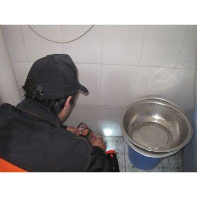 供应杀虫灭鼠 专业服务 天河区(广州全城)真诚为您服务