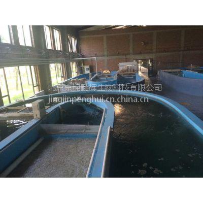 循环水养鱼场养虾场 工厂化水产养殖系统设计安装