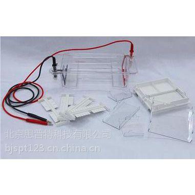 思普特 琼脂糖水平电泳仪(槽) 型号:LM61-DYCP-31DN
