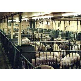 屠宰场污水处理、屠宰场污水处理设备、屠宰场污水处理公司珂沅环保