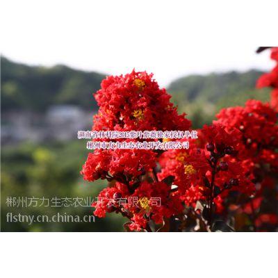 关于美国三红紫薇 10qtzs.com