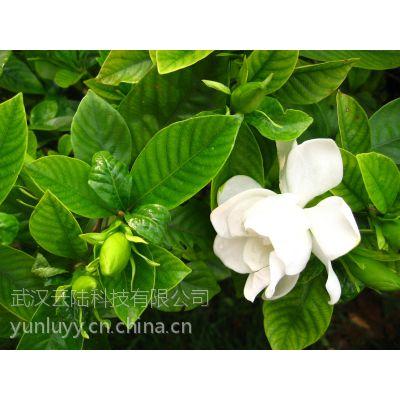 武汉绿植大小红掌盆栽,可水培,同城免费送货,能净化空气