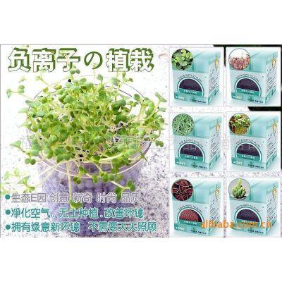 供应DIY植物装饰陶碳球负离子植栽创意盆栽礼品