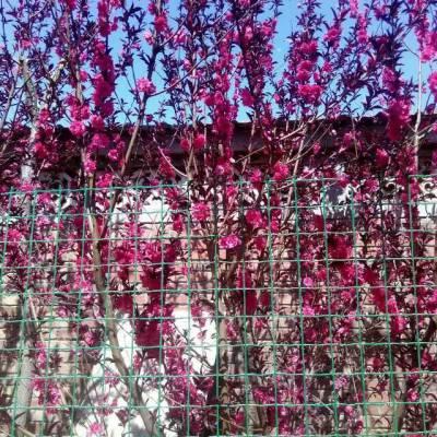 【畅销款】种植果园圈地围栏网 畜牧业围栏铁丝网 花卉园林围网