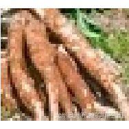 大型厂家常年提供广西天塔牌烘干木薯渣饲料原料质优价廉