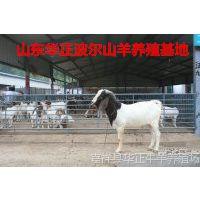 波尔山羊1-5代种羊苗,波尔山羊的鉴别