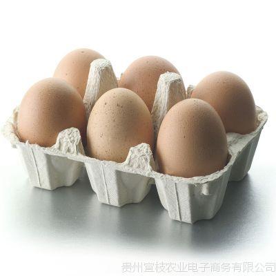 贵州高山散养土鸡蛋 营养丰富 老少皆宜 滋补佳品 绿色健康食品