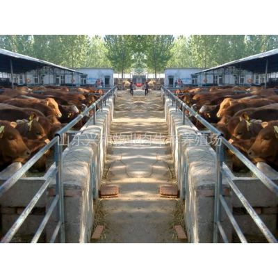 供应广西肉牛养殖场兴和牧业养牛基地