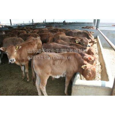 供应供应河北纯种.杂交大小小尾寒羊养殖,羊羔孕羊种公羊价格表