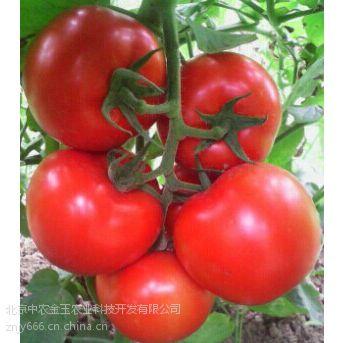 国产金玉x3f1-抗ty粉果番茄种子