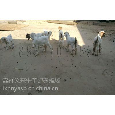 镇江哪里卖小牛犊≈3≈[眼肌面积89.1平方厘米。]