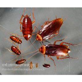 漯河洁居环保灭虫公司专业饭店酒店灭鼠灭蟑螂