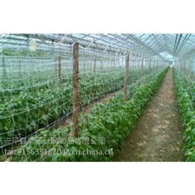 蔬菜植物攀爬网、泰泽植物攀爬网(图)、攀爬网厂家