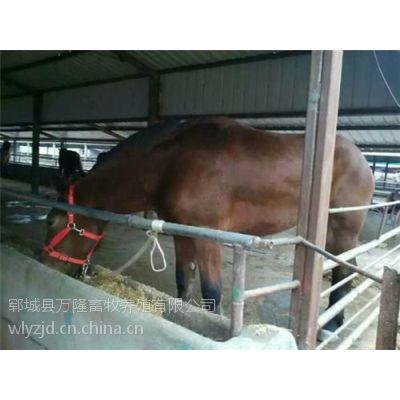 万隆畜牧养殖(图),种马选配,济南肉马养殖