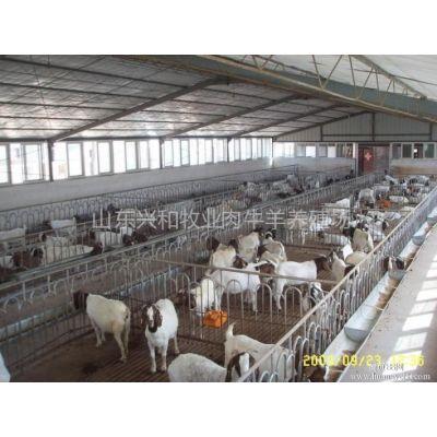 供应郑州波尔山羊羊苗价格孕羊多少钱一只河南养羊场