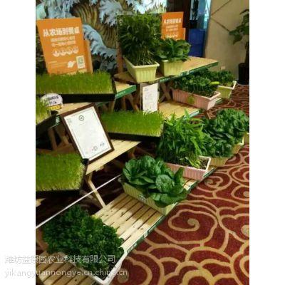 益康园芽苗菜富氧有机种植技术教学招商加盟