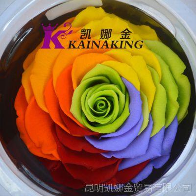 厄瓜多尔进口9-10cm彩虹玫瑰永生花 高端创意情人节礼品必备