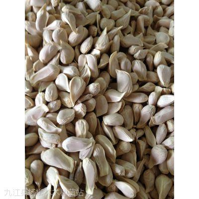 <香橼种子…江西香橼种子批发>香橼种子价格
