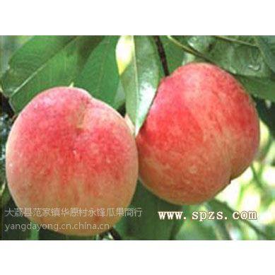 供应供应陕西优质早熟油桃沙红桃毛桃郑二郑三毛桃