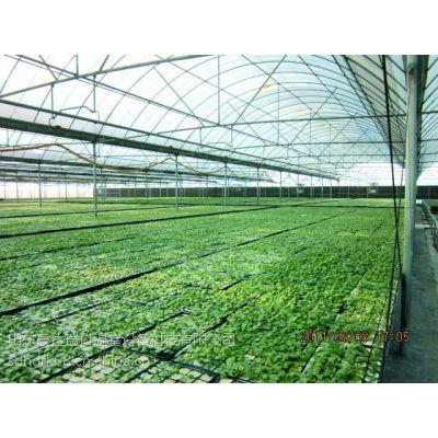 供应山东德州山西平凉中草药种植用8mmPC板智能连栋温室 育苗智能温室建设 造价