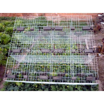 新型鸽笼,养殖笼具,镀锌鸽子笼生产批发,安平飞创90元/套13784187308李