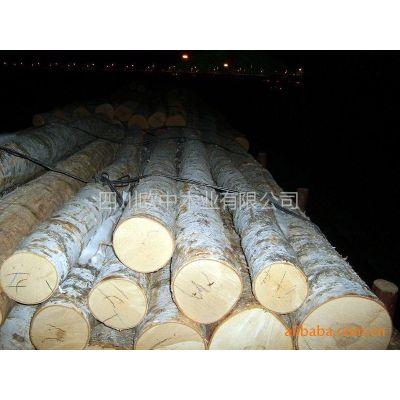 供应欧洲白桦原木刨切、ABC级
