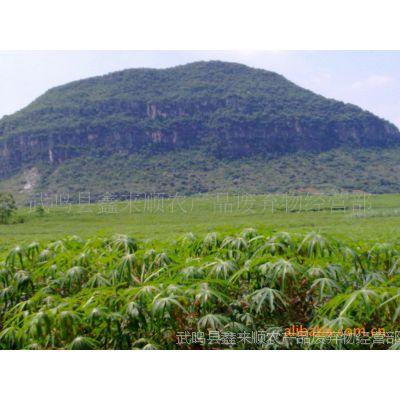 供应广西产低成本高蛋白饲料原料:干木薯叶粉