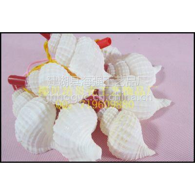 供应厂家直供贝壳海螺号螺吹儿童玩具贝壳口哨白螺号/吹子