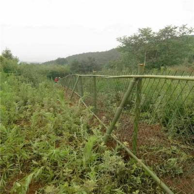 圈地菱形网@贵州圈地菱形网@绿色防锈漆钢板网厂家