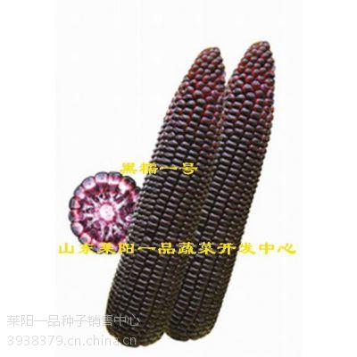 黑玉米种子杂交一代黑糯一号鲜食玉米品种