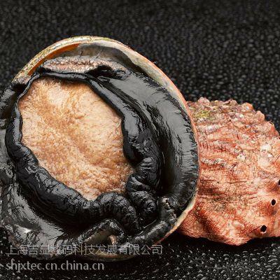野生澳大利亚进口鲜活大鲍鱼【澳鲍】刺身佳品500g-600g