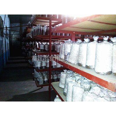 供应平菇菌种-20多年食用菌技术