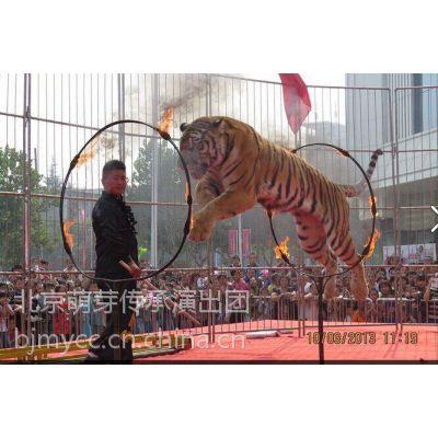 提供马戏团演出 驯兽 马术 各种动物表演