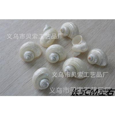 天然贝壳 进口蝾螺  海螺 鱼缸 水族箱造景 装饰 旅游工艺品