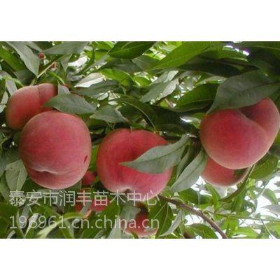 桃树苗|润丰苗木|桃树苗价格