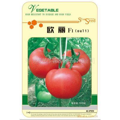 供应供应西红柿种子 欧丽粉色番茄种子抗TY病毒1000粒