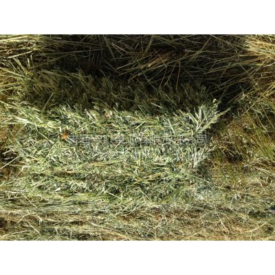 供应青海有机燕麦草 牧草