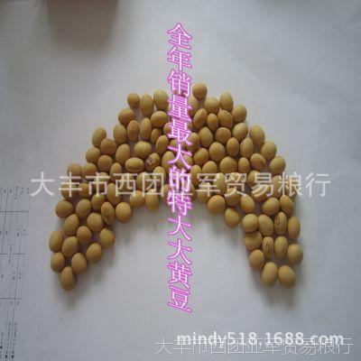 厂家直销 现货供应江苏优质豆类 大豆 大黄豆 精选大粒 放心产品