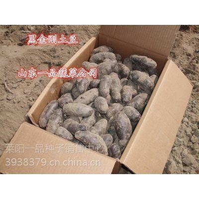 土豆新品种黑金刚土豆种子